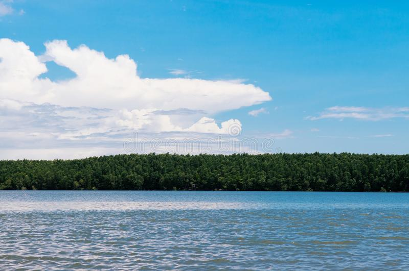 Skyscape blue summer sky with white clouds and tropical mangrove stock photography