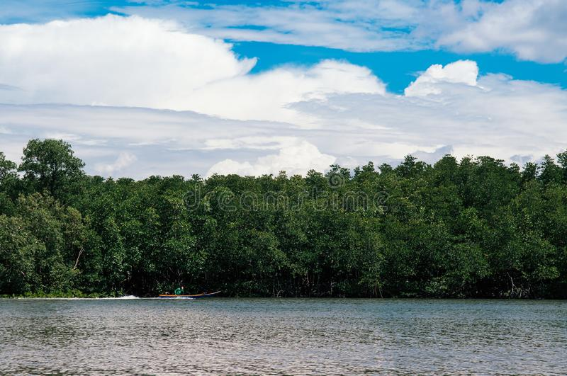 Skyscape blue summer sky with white clouds and tropical mangrove royalty free stock photo