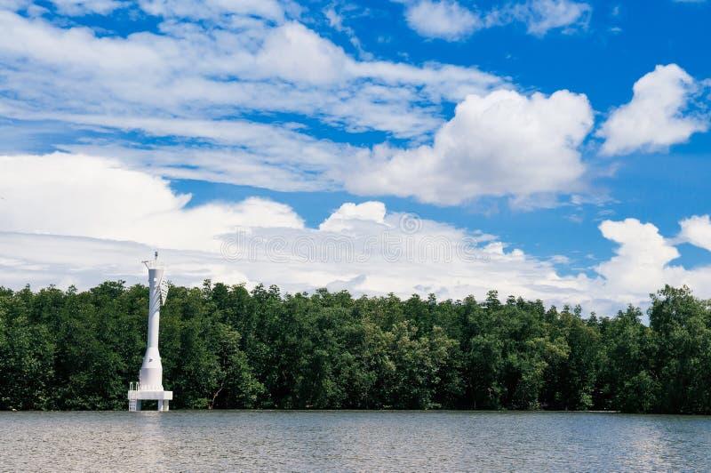 Skyscape slösar sommarhimmel med vita moln och den tropiska mangroven royaltyfri bild