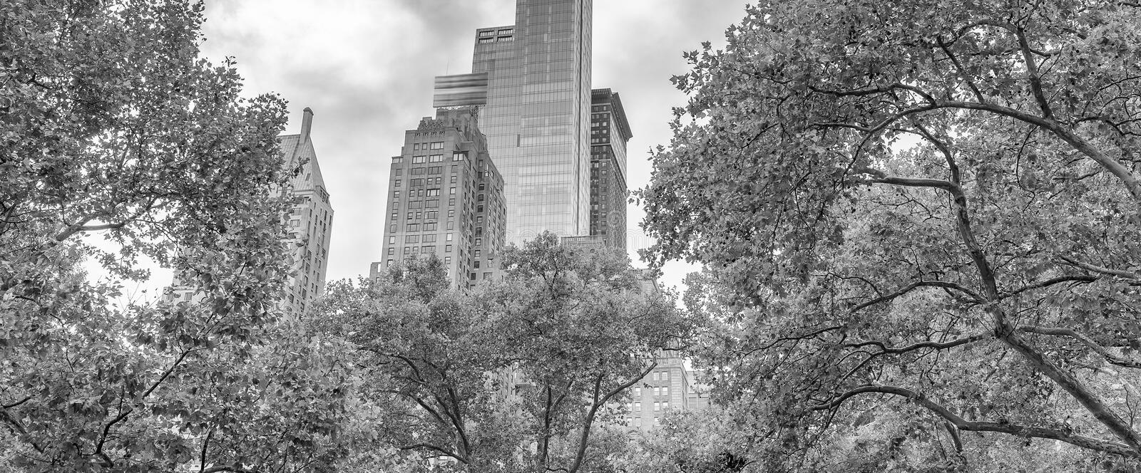 Skyscrapers and trees in Central Park, New York City royalty free stock photography