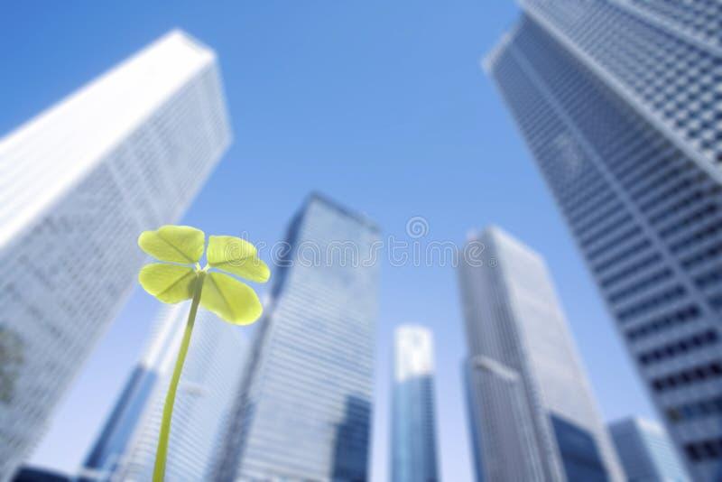 Skyskrapa och växt av släktet Trifolium arkivfoton
