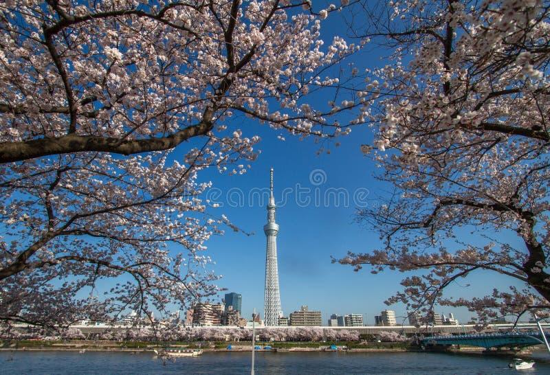Skytree di Tokyo immagine stock libera da diritti