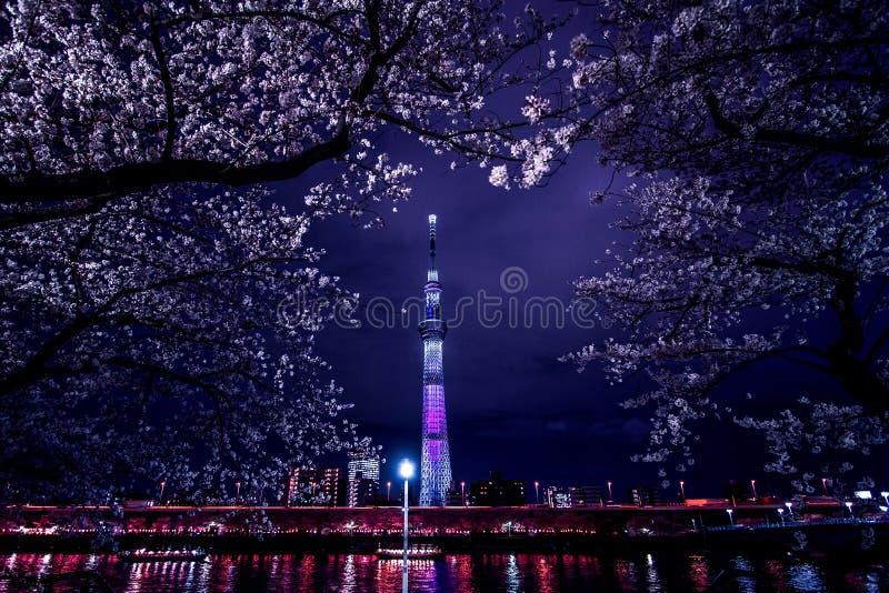 Skytree et Sakura la nuit photographie stock libre de droits