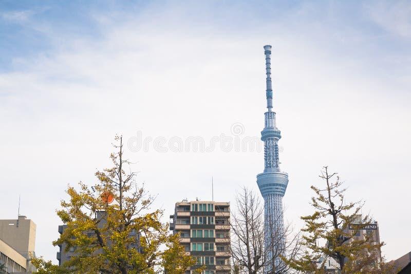 skytree tokyo royaltyfri bild