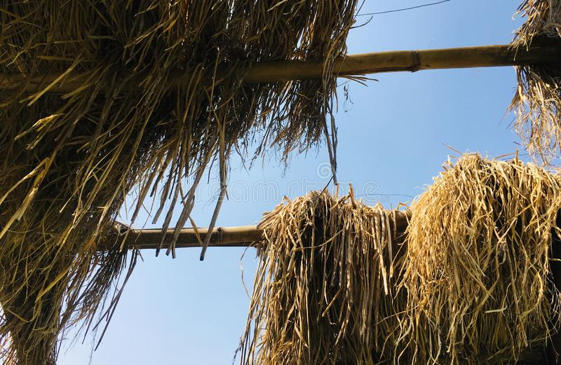 Skyview from Thatch Roof in a farm. As JPG File royalty free stock photos