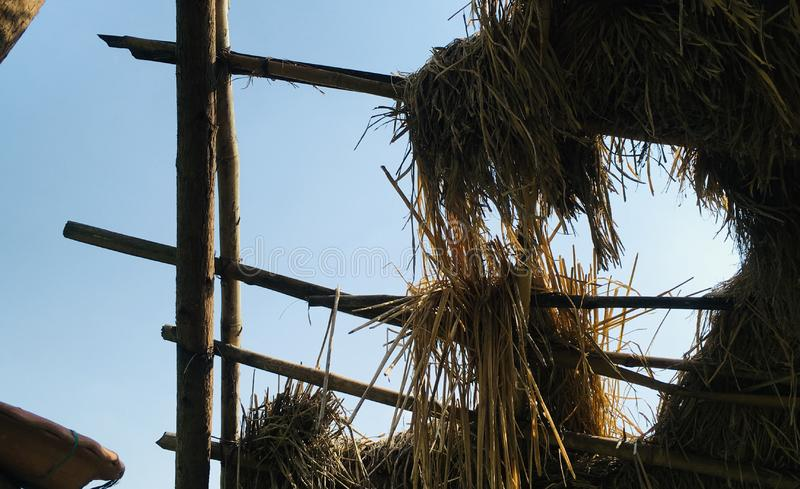 Skyview from Thatch Roof in a farm. As JPG File stock image