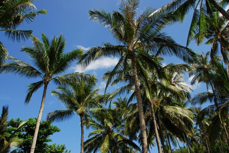 Skyward palme immagini stock