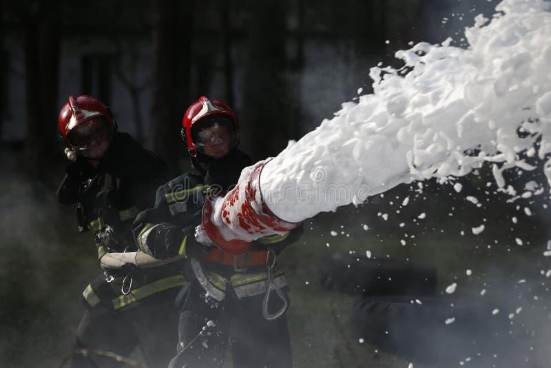 släck brandskogen arkivbilder