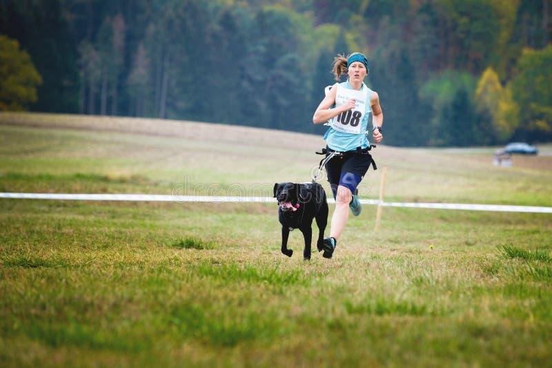 Slädehund som kör med den unga kvinnan, Mushing av Crosscountry lopp för snö i typisk höstligt väder Canincross kategori arkivfoton