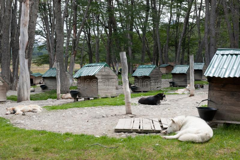 Slädehundkapplöpning på kedjor, södra Argentina arkivbild