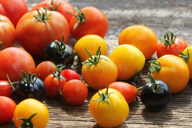 Släktklenodvariationstomater på den lantliga tabellen Röd färgrik tomat -, gulna, svärta, apelsinen Skördgrönsakmatlagning royaltyfri foto