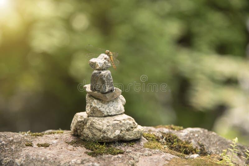 Slända med zenstenen perfekt meditation för begrepp, jämvikt royaltyfria foton