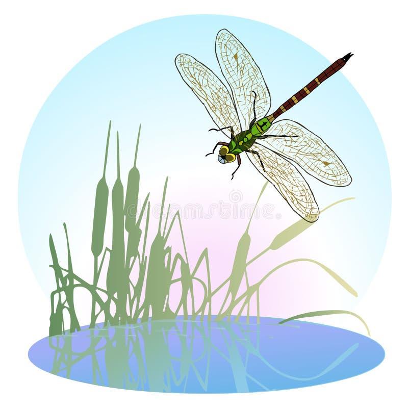 Slända som flyger över ett damm som är bevuxet med vasser Liv flyger rov- kryp royaltyfri illustrationer