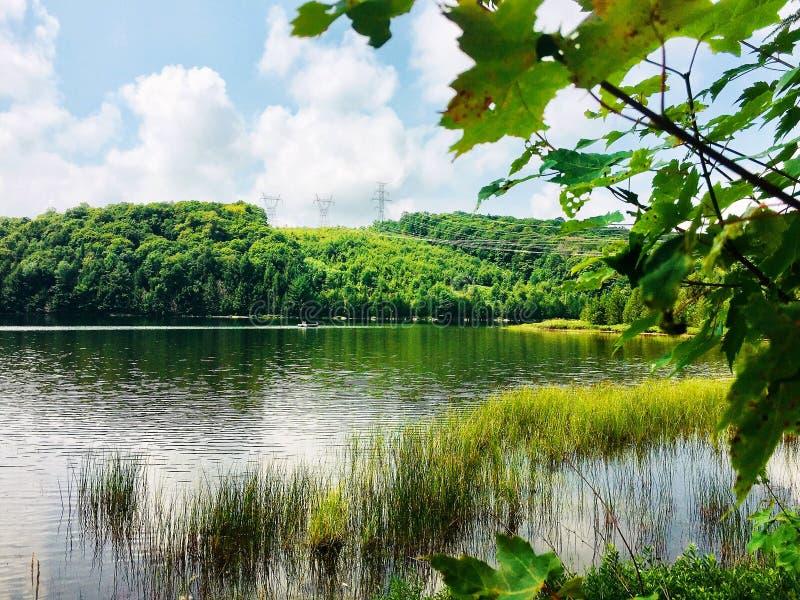 Slät sjövattenyttersida under ljust blå himmel- och closeuplönnträd arkivbilder