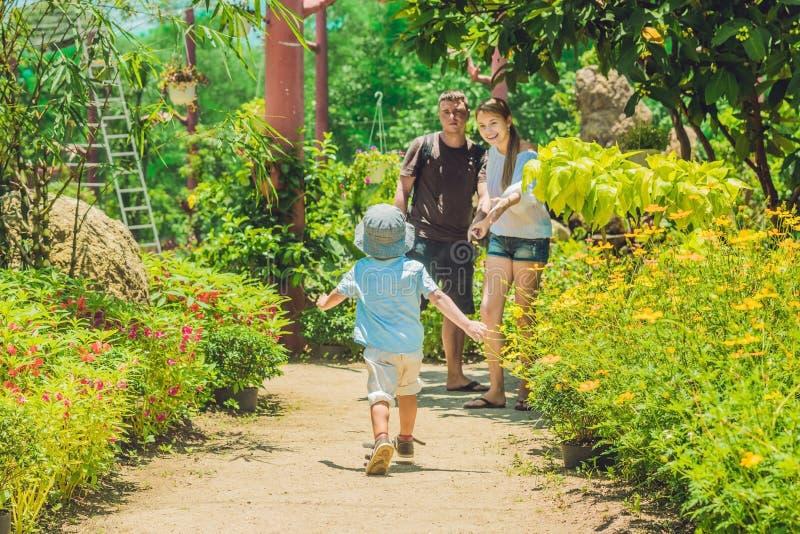 Slätt vaggar och dammet på en tropisk skogbakgrund royaltyfri bild