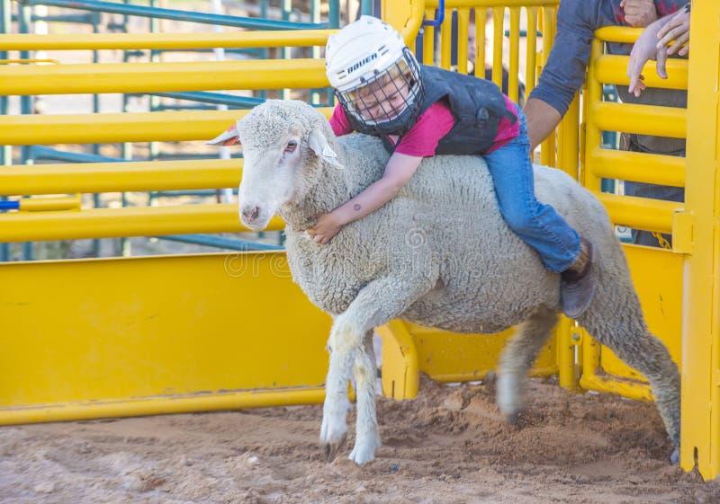Slå sönder för fårkött royaltyfri foto