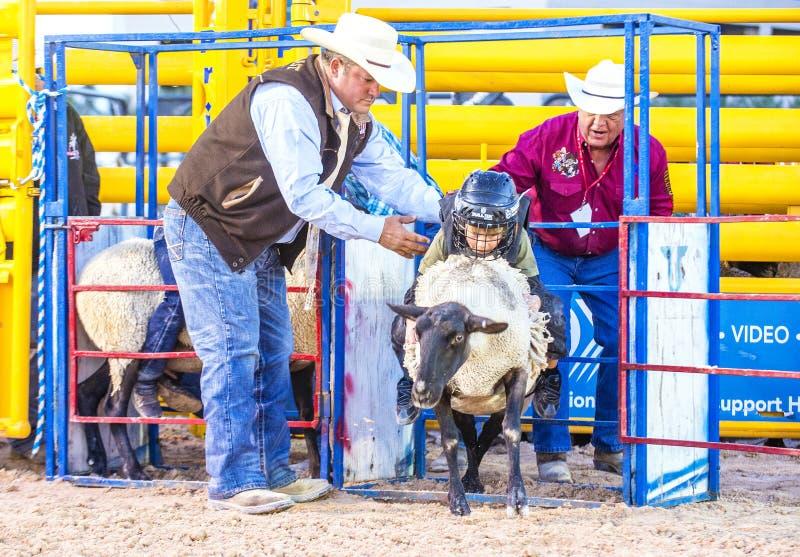 Slå sönder för fårkött arkivfoton