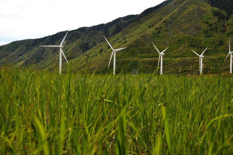Download Slående gräswindmills arkivfoto. Bild av bygger, ytter - 19788320