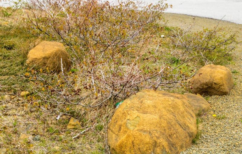 Slående guling vaggar av högslättarna, Gros Morne National Par arkivbilder