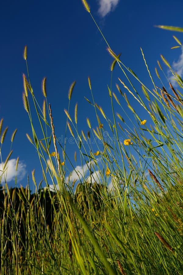 slående wild wind för gräs fotografering för bildbyråer