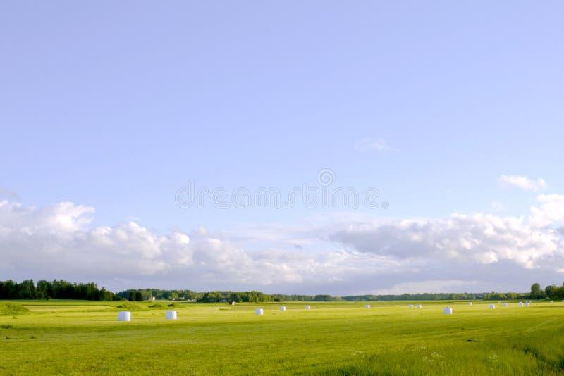 Slåget in i vita plast- baler av hö för vintermat som ligger på lantgårdfältet som är klart att samlas mot en molnig himmel royaltyfri fotografi