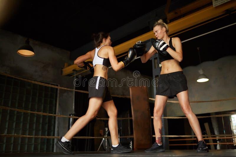 Slåss för två kvinnligt boxare royaltyfria foton
