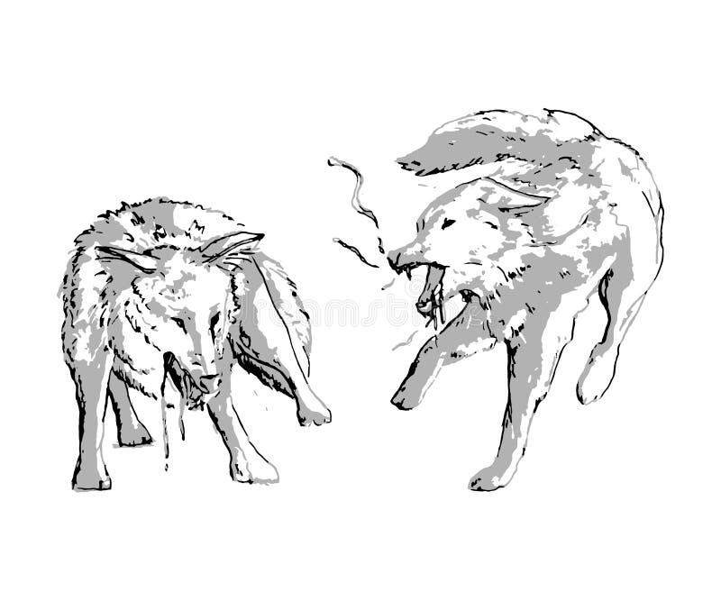 Slåss för två varger Isolerade objekt på vit bakgrund stock illustrationer