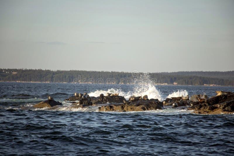 A?sla la costa del puerto Maine de la barra en ondas que se estrellan foto de archivo libre de regalías