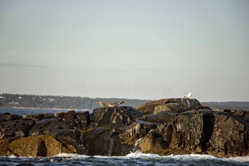 A?sla la costa del puerto Maine de la barra en ondas que se estrellan imágenes de archivo libres de regalías