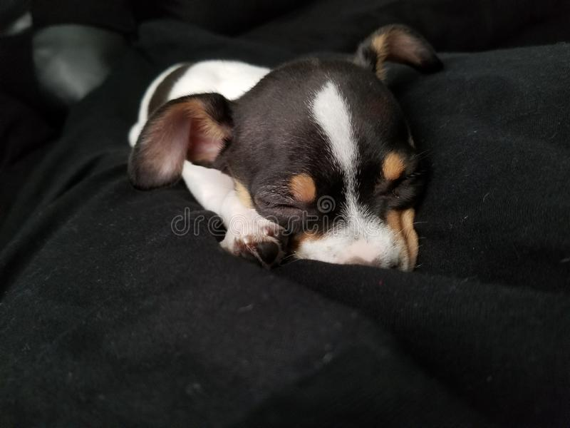 Slaap aanbiddelijk puppy stock afbeelding