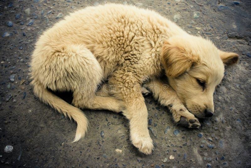 Slaap dakloos puppy. stock foto's