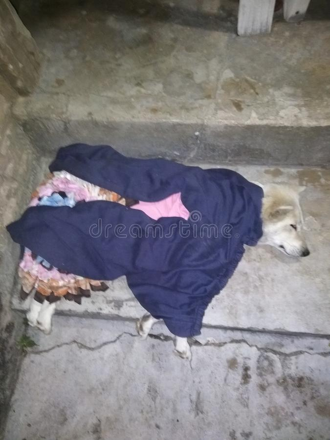 Slaap goed hond stock foto's
