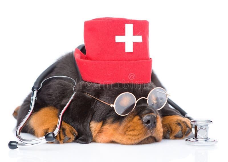 Slaap rottweiler puppyhond die verpleegsters medische hoed dragen Geïsoleerde royalty-vrije stock foto's