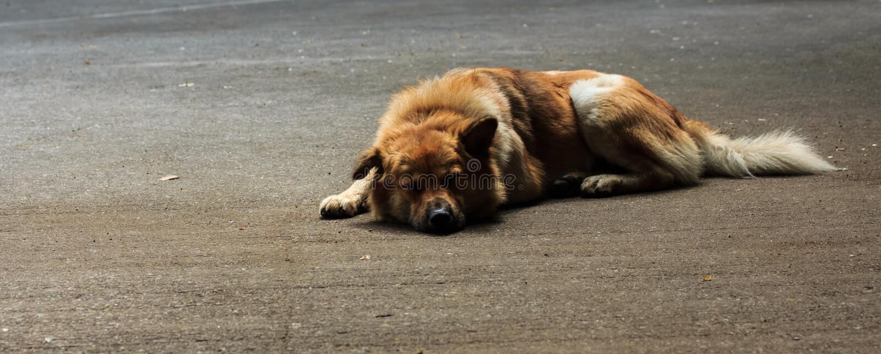 Slaap verdwaalde honden stock afbeeldingen