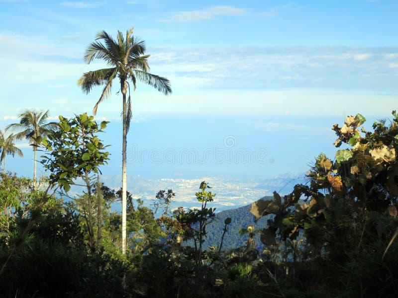 Slaapboom (Palm) / Sleeping Wax Palm; Santa Marta Parakeet, Fund royalty free stock photo