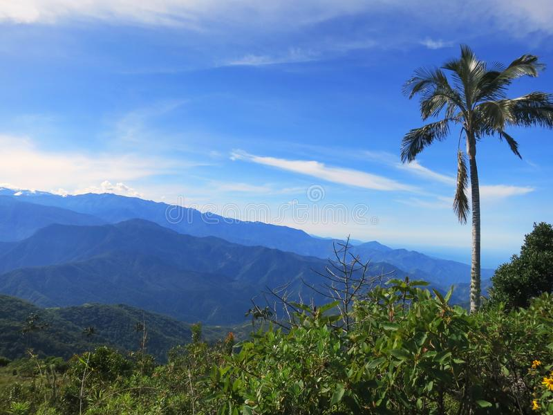 Slaapboom (palma)/palma de cera do sono; Santa Marta Parakeet, fundo fotos de stock royalty free