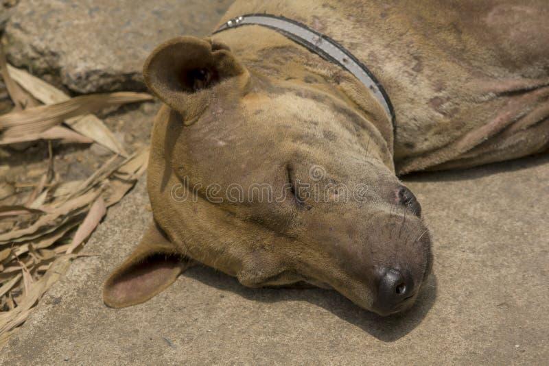Slaaphond op de stoep royalty-vrije stock afbeeldingen