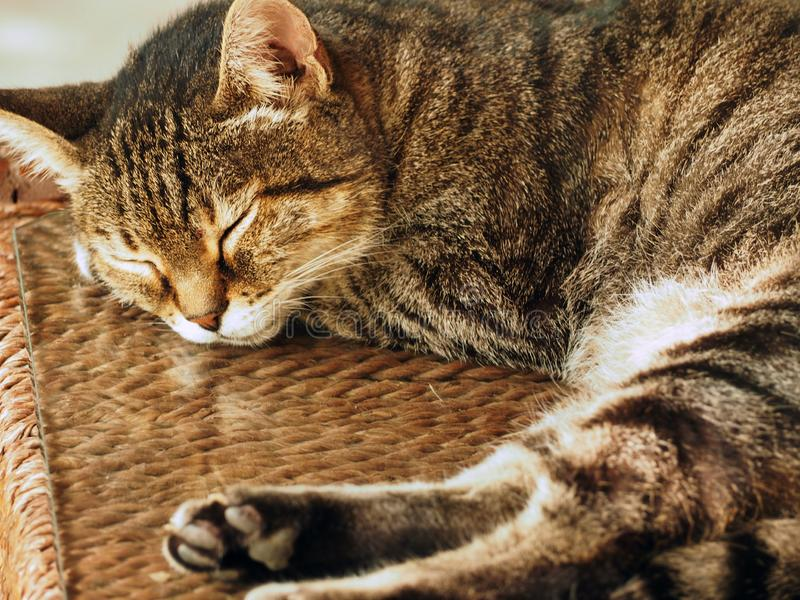 Slaapkat - bruine gestripte kat op een bestrating in openlucht royalty-vrije stock foto