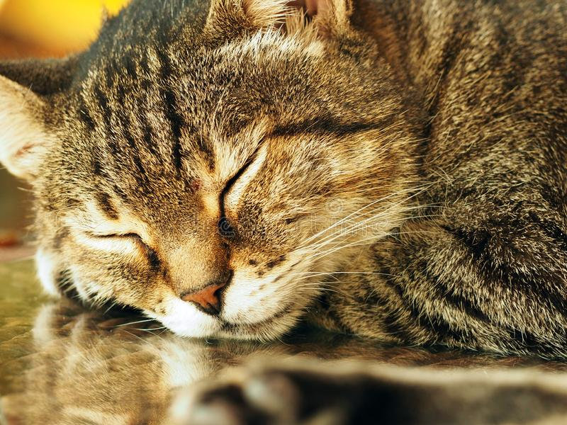 Slaapkat - bruine gestripte kat op een bestrating in openlucht royalty-vrije stock afbeelding