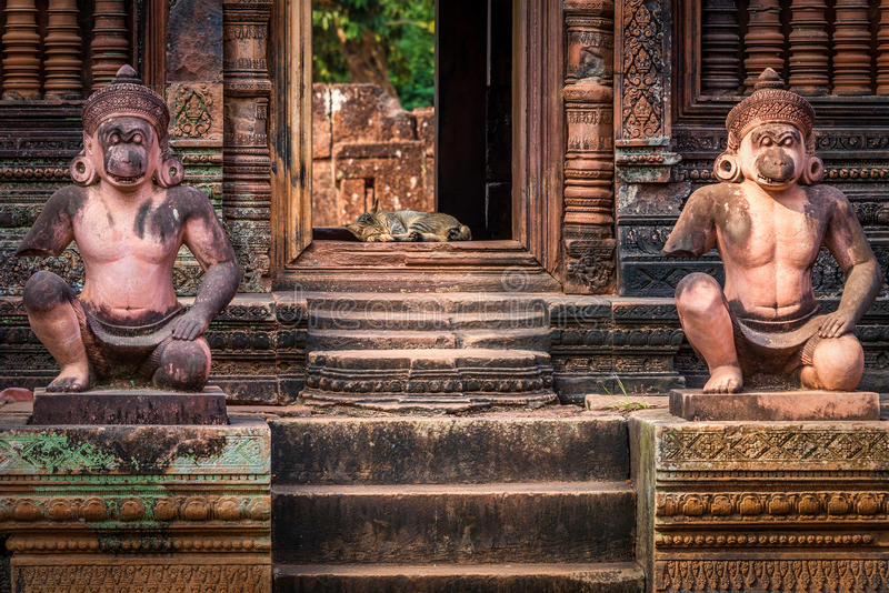 Slaapkat in deuropening van oude tempel royalty-vrije stock fotografie