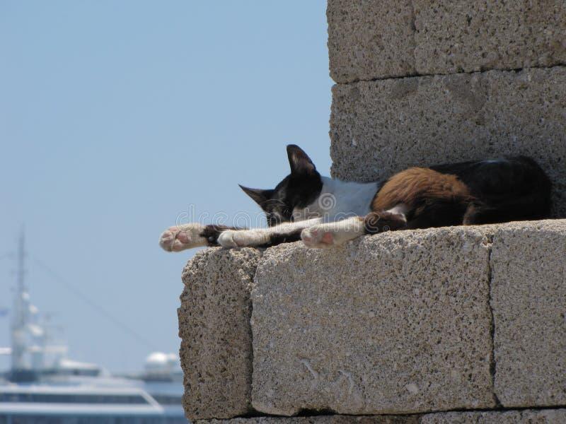 Slaapkat in een havenmuur stock fotografie
