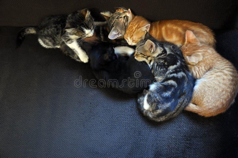 Slaapkatjes royalty-vrije stock afbeelding
