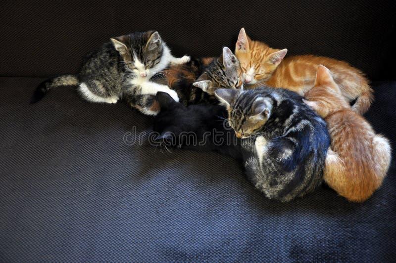 Slaapkatjes stock afbeelding