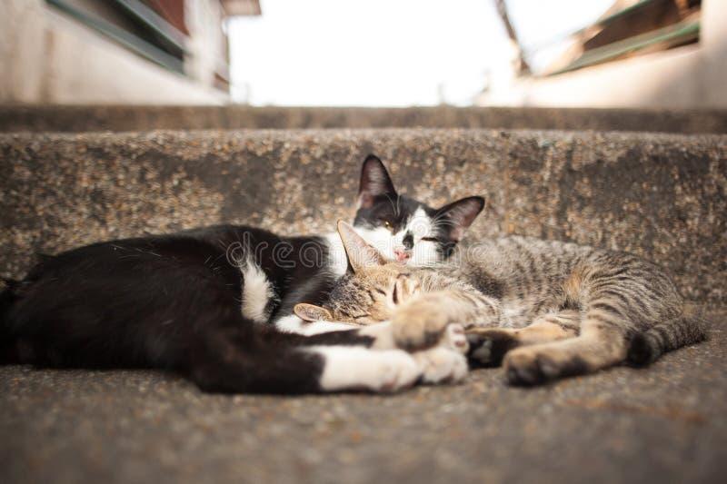 Slaapkatten royalty-vrije stock foto's