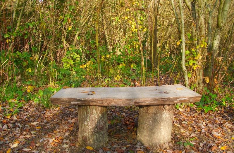 Slab Wooden Bench with Woodland Behind. Slab-style wooden bench with autumnal woodland in the background. Themes: nature walks, relaxing, enjoying the stock photo