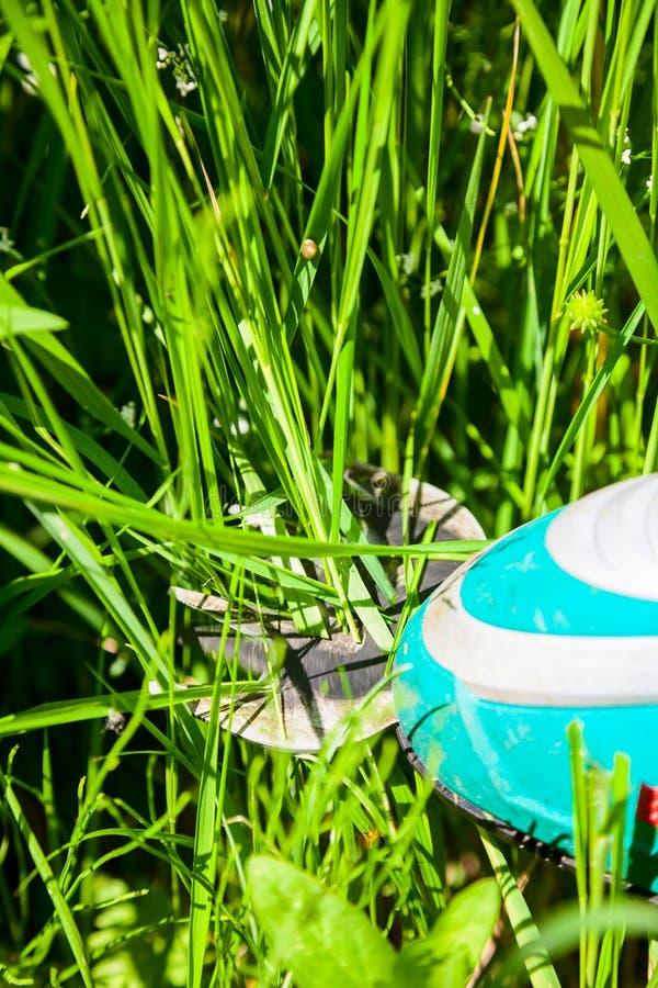 Sladdlös grässax royaltyfri foto