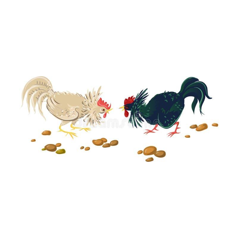 Slag van twee landbouwbedrijfhanen, witte en zwarte kleur royalty-vrije illustratie