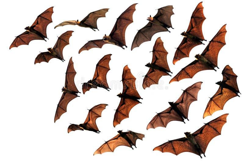 Slagträn för frukt för flygräv i himlen arkivfoto