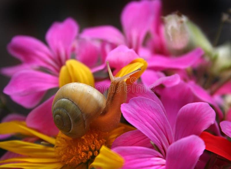 Slak in de bloemen royalty-vrije stock foto's