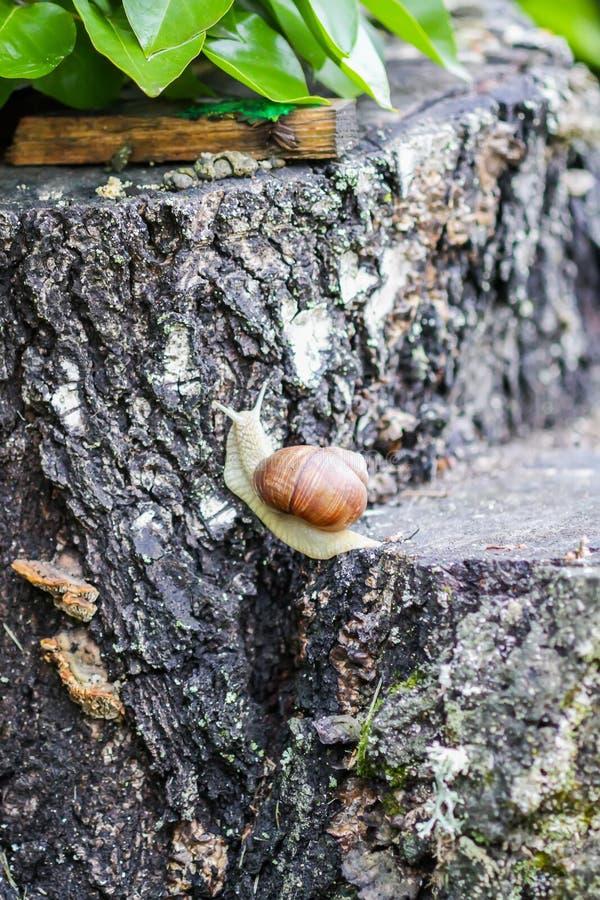 Slak die in de zomerdag in tuin kruipen royalty-vrije stock fotografie